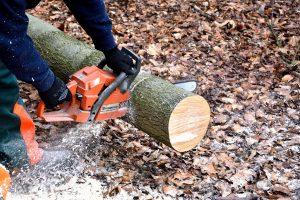 stillwater mn tree removal