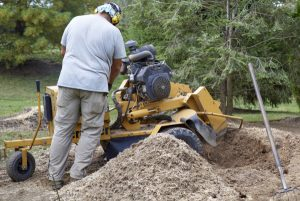 grinding a tree stump at a stillwater, mn home