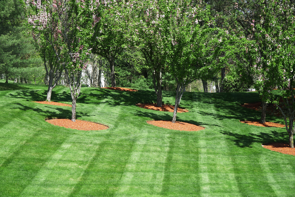 Residential Lawn Care in Stillwater MN